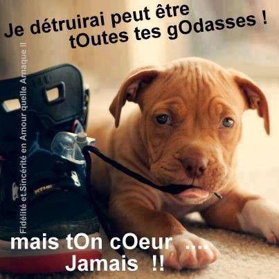 Le message d'un chien